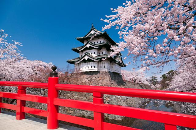 弘前城公園の弘前城天守閣と下乗橋と桜の写真素材 [FYI01656858]