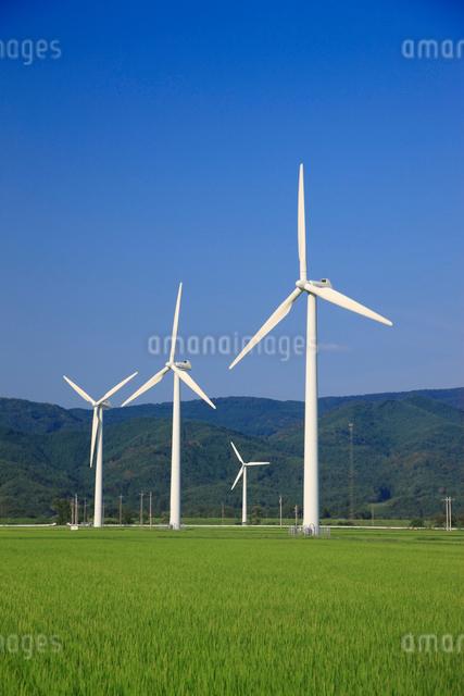 立川の風力発電風車の写真素材 [FYI01656861]