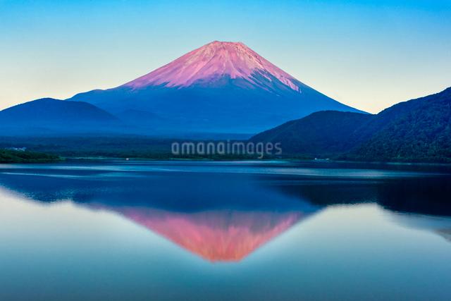 赤富士 本栖湖と富士山の写真素材 [FYI01657036]