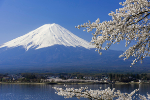 富士山と桜の写真素材 [FYI01657054]