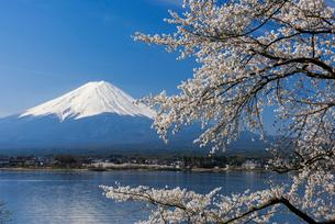 富士山と桜の写真素材 [FYI01657094]