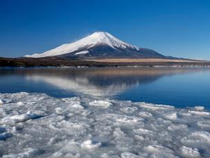 富士山 山中湖畔冬の朝の写真素材 [FYI01657141]