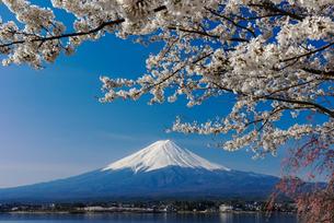 富士山と桜の写真素材 [FYI01657179]