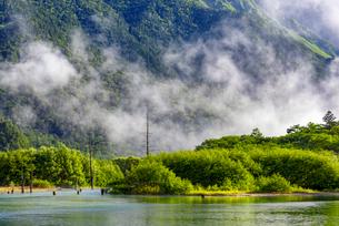 朝霧湧く新緑の上高地大正池の写真素材 [FYI01657232]