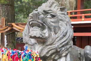 日光二荒山神社の「良さん」狛犬の写真素材 [FYI01657242]