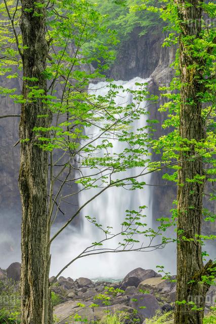 苗名滝の写真素材 [FYI01657265]