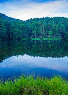 新緑の御射鹿池の写真素材 [FYI01657373]
