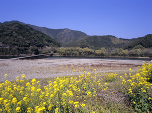 三里沈下橋と菜の花 四万十川の写真素材 [FYI01657414]