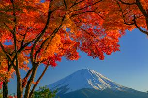 富士山と紅葉の写真素材 [FYI01657443]