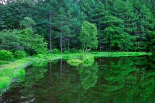 新緑の御射鹿池の写真素材 [FYI01657501]