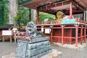 日光二荒山神社の「良さん」狛犬と大黒様の写真素材 [FYI01657505]