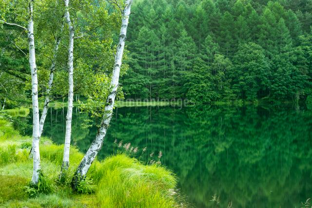 新緑の御射鹿池の写真素材 [FYI01657548]