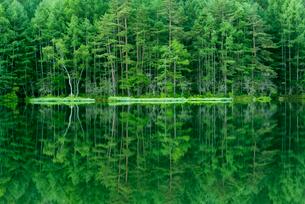 新緑の御射鹿池の写真素材 [FYI01657600]