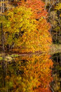 御射鹿池の紅葉の写真素材 [FYI01657708]