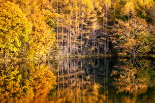 御射鹿池の紅葉の写真素材 [FYI01657727]