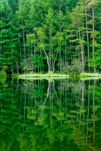 新緑の御射鹿池の写真素材 [FYI01657794]