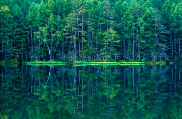 新緑の御射鹿池の写真素材 [FYI01657795]