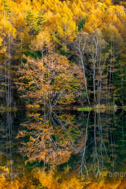 御射鹿池の紅葉の写真素材 [FYI01657829]