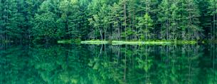 新緑の御射鹿池の写真素材 [FYI01657890]