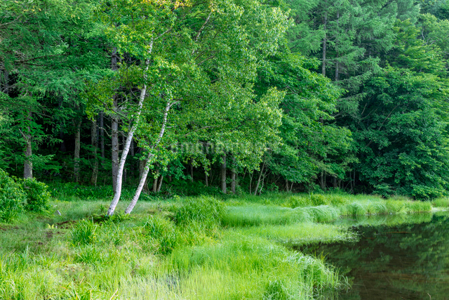 新緑の御射鹿池の写真素材 [FYI01657916]