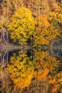 御射鹿池の紅葉の写真素材 [FYI01657931]