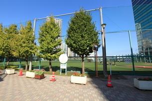 天王洲公園野球場の写真素材 [FYI01657937]