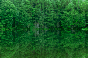 新緑の御射鹿池の写真素材 [FYI01658002]
