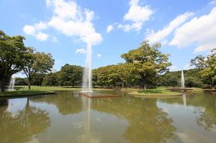 代々木公園の写真素材 [FYI01658115]