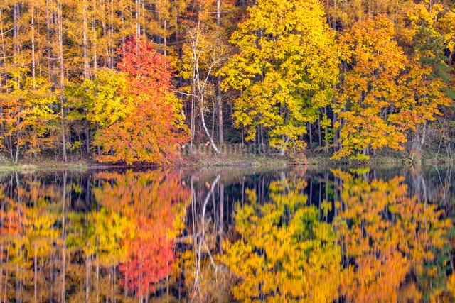 御射鹿池の紅葉の写真素材 [FYI01658165]