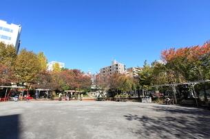鉄砲洲児童公園の写真素材 [FYI01658717]
