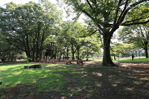 代々木公園の写真素材 [FYI01658881]