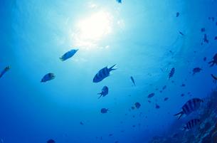 逆光の海面と魚の写真素材 [FYI01659120]