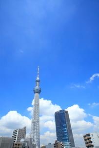 東京スカイツリーの写真素材 [FYI01659643]