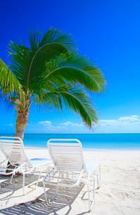 砂浜のヤシの木とデッキチェアの写真素材 [FYI01659809]