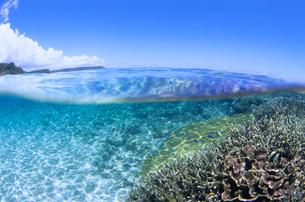 サンゴと魚と青空の写真素材 [FYI01660396]