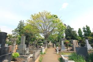雑司ヶ谷霊園の写真素材 [FYI01660529]