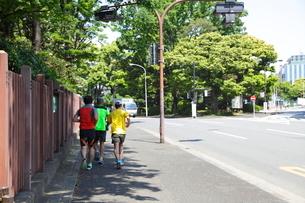 神宮外苑をジョギングする人々の写真素材 [FYI01660663]