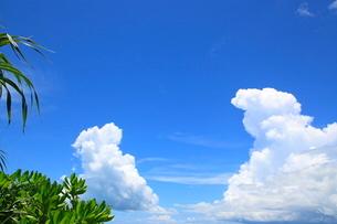 緑の葉と入道雲の写真素材 [FYI01660744]