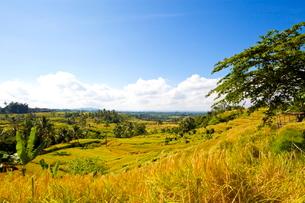 インドネシア バリ島 ジャティルウィライステラスの写真素材 [FYI01660893]