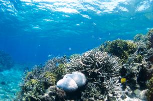 サンゴと魚たちの写真素材 [FYI01661144]