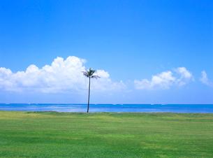 ワイアホレビーチパーク オアフ島 ハワイの写真素材 [FYI01661147]