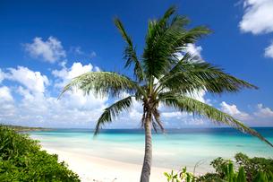 ビーチのヤシの木の写真素材 [FYI01661291]
