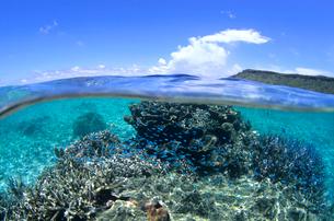 サンゴと魚と青空の写真素材 [FYI01661722]