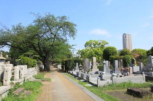 青山霊園の写真素材 [FYI01662135]