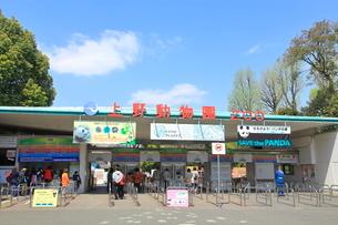上野動物園の写真素材 [FYI01662427]