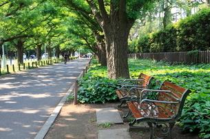 神宮外苑いちょう並木の写真素材 [FYI01662872]