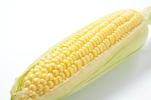 トウモロコシの写真素材 [FYI01665068]