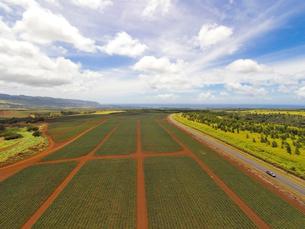 ハワイの風景 パイナップル畑の写真素材 [FYI01665110]