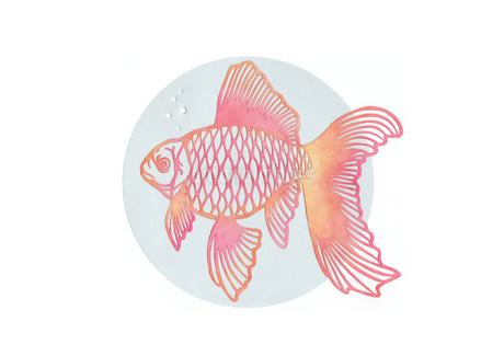 金魚の写真素材 [FYI01665730]