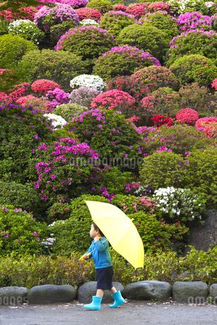 黄色い傘と水色の長靴を履いて走る子供の写真素材 [FYI01665786]